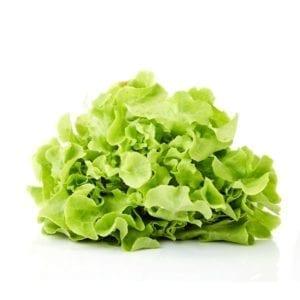 feuille chêne salade salades France Passion Saisons légumes saison